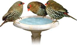 Finch Supplies