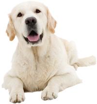 Vetafarm Dog Wormer